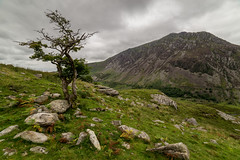 Pen yr Ole Wen (PSHiggins) Tags: nikon d610 samyang manual 14mm wideangle wide manualfocus fx fullframe ogwen nant francon nantfrancon cwm valley pass welash snowdonia welsh wales river a5 tree hawthorn blackthorn august scree
