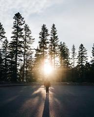 Last Light (Alexander Tran | atranphoto.com) Tags: mount rainier national park nps nps100 goparks findyourpark mountrainier nationalpark washington wa wash atran atranphoto atranfoto fujifilm xt1 fujifilmxus fuji flare sun last light trees