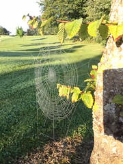 The Spiderweb (firehouse.ie) Tags: ireland 2016 wildlife nature insects bugs bug insect spiders spiderweb webs web spider
