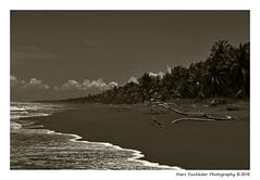 Playa Palo Seco, Parita, Costa Rica (Marc Funkleder Photography) Tags: playa plage beach paloseco parrita costarica nature sauvage wild monochrome sepia nikon d750 nikon28300 cocotier coconuttree bois wood branche tronc trunk branch