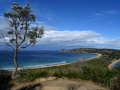 Palm Beach (enjosmith) Tags: sydney palm beach isthmus tree gree blue ocean sky
