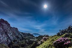 Moon Festival  (Sharleen Chao) Tags: taiwanalpinerhododendron rhododendronpseudochrysanthumhayata taiwan nantou mthehuan cloudy night canon 5dmarkiii 1635mm color nationalpark      spring  mainpeak longexposure moon