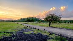 DSCF2363 (Hendry99099) Tags: baluran taman nasional savana bekol banyuwangi xe2 xf1855mm