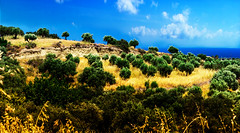 Olive Plantation (christianwahl58) Tags: landscape olive kreta crete 1785 griechenland landschaft efs canoneos60d