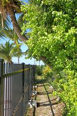 Key West (Florida) Trip, November 2014 3208Ri 4x6 (edgarandron - Busy!) Tags: keys florida keywest floridakeys higgsbeach westmartellotower keywestgardenclub