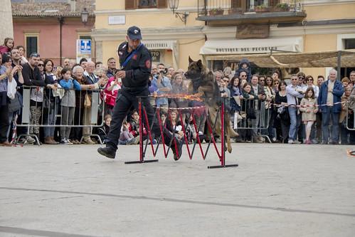 cinofili_a_norcia_in_piazza-022_da_raw