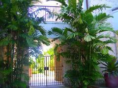 ~Oct 2009 Fairchild Gardens #10~ (endemanf) Tags: miamiflorida fairchildbotanicalgardens tropicallandscapes tropicaljunglegardens