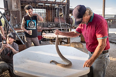 no, it's not for supper (bugeyed_G) Tags: ranch arizona southwest outdoors desert reptile snake rancher rattlesnake keeylocko mohaverattlesnake bugeyedg