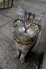 Fatty (Moldovia) Tags: pet cute animal cat mouth nose eyes feline ears whiskers fatty htconex