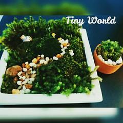 รีวิวสวนในขวดแก้ว เอ้ย ภาพนี้เป็นสวนถาดจากวัตถุดิบที่เหลือจากชุดจัดสวนในขวด ขอบคุณภาพรีวิวจากคุณลูกค้าครับ ดูรีวิวที่ 👉#tinyworldreview 🌳🌿🌴🌲 #สวนขวด #สวนในขวด #สวน #สวนขวดโหล #hipster #moss #mosses