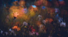 Colorful Dreams (Dhina A) Tags: sony a7rii ilce7rm2 a7r2 sonyalpha minolta rf rokkorx 250mm f56 mirror reflex minolta250mmf56 md prime rokkor bokeh colorful dreams