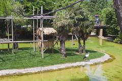 Cicogne (querin.rene) Tags: renquerin qdesign parcolecornelle parcofaunistico lecornelle animali animals cicogna