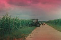 Bedrohlich (alf sigaro) Tags: vineyard sl vineyards weinberg beier badenwrttemberg beirette weinberge sl300 beirettesl300 beirettesl orwocolorcng100