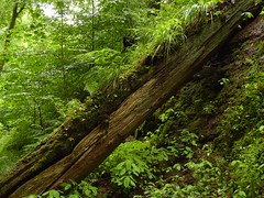 In der Drachenschlucht bei Eisenach 13 (Chironius) Tags: eisenach thringen deutschland germany allemagne alemania germania    ogie pomie niemcy pomienie holz wood legno madera bois hout