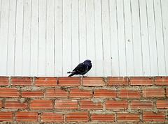 L'oiseau Solitaire (L Photographer) Tags: bird pajaro minimalismo airelibre oisseau