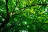 Green tree (Eleonora Cacciari) Tags: green rami branches branch tree albero verde tantoverde ilovegreen amoilverde amolanatura natura nature eos1200d eleonoracacciari emiliaromagna ecacciari canon canoneos1200d canonefs1018mm
