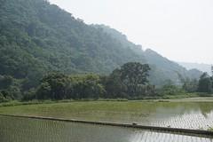 DSC1170 (rhema.lin.227) Tags: rice patty nantou taiwan photography backdrop