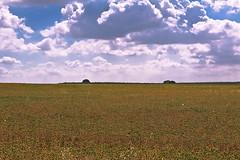 El campo 02  -  The field 02 (ricardocarmonafdez) Tags: sevilla bollullosdelamitacin campo field country rural paisaje landscape cielo sky nubes clouds color luz light minimalismo canon