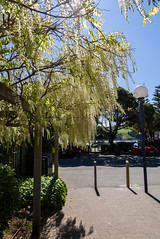 Beauty of Spring (Jocey K) Tags: newzealand spring bankspeninsula akaroa flowers wisteria sky cars trees lamp