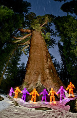 THE GRIZZLY GIANT (tycampbe) Tags: ifttt 500px forest people travel fisheye tree abstract stars california artist long exposure light painting yosemite art night photography nightscape mariposa grove grizzly giant