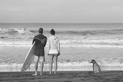 Cek Ombak (trancebutton) Tags: beachlife beach surfers surf morning mistymorning surfsup dogs couple canggu bali indonesia