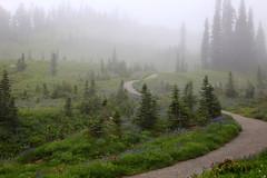 Foggy Wildflowers on Mt. Rainier, (1 of 3) (louelke - gone a lot) Tags: mtrainier mtrainiernationalpark mtrainiertrail paradisemtrainier wildflowers skylinetrail glaciervista cascademountains washingtonstate volcano fog foggy