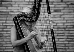 The unknown Harpist (grothe.manuel) Tags: harpist harp italy rome nikond5300 castelsantangelo 70300mm blackwhite bokeh streetmusician devotion thegodfather socialdocumentary streetphotography