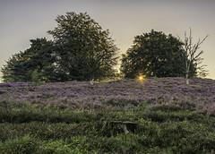 sunrise Veluwezoom (PROSPECT2607) Tags: sunrise landscape landschap longexposure langesluitertijd sun trees purple veluwezoom capture composition colorful details exposure forest hdr netherlands nederland nature outdoor photography view zon zonsopkomst heide heather