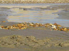 3592 Pebbles on the beach (Andy panomaniacanonymous) Tags: 20160820 bbb beach kent pebbles ppp romneysands sand sss water www