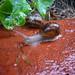 Les escargots de Saint-Maurice