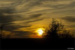 EL OCASO (mañega) Tags: sunset sky orange sol silhouette backlight contraluz de arbol atardecer spring sony colores cielo silueta puesta naranja aire ocaso libre nube anochecer hocesduraton serenidad