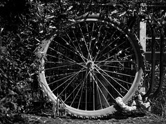 Inge Hoogendoorn (ingehoogendoorn) Tags: blackandwhite bike bicycle wheel contrast cycling zwartwit wheels streetphotography bikes stilleven bicycles stillife blacknwhite fietsen wielen fiets wiel dutchbike fietswiel dutchbikes superblackandwhite