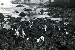 Rocky coastline, tide pools, and students (B) (PUC Special Collections) Tags: california coastal mendocino 1960s norcal 1970s biology tidepools puc albion estuaries mendocinocounty pacificunioncollege albionfieldstation albionbiologicalfieldstation pucbiologydepartment