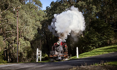 Bellowing (michaelgreenhill) Tags: sunshine sunny smoke 12a australia trains steam doubleheaded sun morning doubleheader lx winter double pbr schoolroad victoria g42 levelcrossing menziescreek puffingbilly au