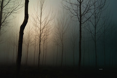 """There is a light at the end...."" (Ilargia64) Tags: tree leaflesstrees forest darkforest nature landscape hope darkness monochrome fog pinkishlight light amayasanchez"