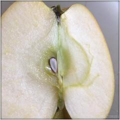apple intern (PIKTORIO) Tags: berlin green apple nature closeup fruit flesh germany flora view seed growth vegetation inside core internal iphone telegraphics piktorio
