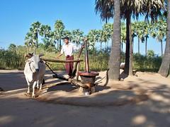 On_ the_way_ to_ Mt.Popa_Bagan (3) (Sasha India) Tags: bagan myanmar burma travel journey asia মায়ানমার ভ্রমণ 緬甸 旅行 म्यांमार यात्रा ミャンマー бирма мьянма баган паган путешествие путешествия подорожі подорож мандри மியான்மார் பயண พม่า การท่องเที่ยว מיאנמר לִנְסוֹעַ ميانمار سفر μιανμάρ ταξίδι