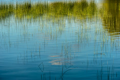 Recreation (*Capture the Moment*) Tags: 2016 elemente farbdominanz gras grass grser lake macro reflections reflexion see sonya7ii sonysel90m28g spiegelung wasser water blau blue green grn