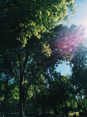 Spring Light (mvrry) Tags: vsco vscocam vscolover vscocamlover green nature spring sun sunlight sunshine trees ease comport breeze iphoneography
