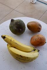 (lulun & kame) Tags:  roseau fruits  america dominica   lumixg20f17