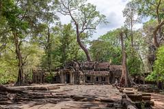 Ta Prohm 6, Angkor (Siem Reap) (bienve958) Tags: camboia siemreap taprohm krongsiemreap camboya kh angkoriantemples angkor temple worldheritageunesco khmerkingjayavarmanvii mahayanabuddhist colefranaisedextrme patrimoniodelahumanidad ficusgibbosa trees arbol arquitecturajemer cambodia estilobayon