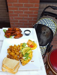 """Baxter made a guest appearance today.  Our outside covered balcony is pet friendly!  Get $10 bottomless mimosas every SUNDAY at Crazy Goose at our """"MIMOSA DEEP HOUSE BRUNCH"""" (789 6th Ave, on 6th & F)!  BRUNCH: 10am-3pm.  *Happy Hour starts @ 3pm; Last mim (markrondeaupresents) Tags: housemusic gaslampsd sdcc sdnightlife crazygoose sdsu usd crazygoosebar dogsofsandiego sdmusicscene dtsd sunday dogfriendlysd deephouse comeplay markrondeaupresents sundaybrunch mesacollege edmsd sdclubbing sd ucsd petfriendly sixonenine sandiego sdbrunch sdliving gaslamp sandiegodog mrp"""