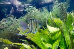 FujiXE2-0150 (QTTheory) Tags: cvg cincinnati ohio newport aquarium newportaquarium fujifilm fujinon xe2 xf 1855mmf284rlmois