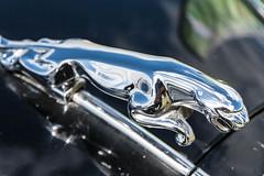DSC_5118.jpg (john_spreadbury) Tags: nikond500 nikon steam engine steamengine johnspreadbury southcerneyairfield rally cars motorbikes lorrys bikes bicycles people sigma lenses 1020sigma 1770sigma digital classic classicbikes american