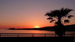 Goodnight ! (GCau) Tags: gecau france provence bandol sunset coucherdesoleil baie palmier palmtree landscape paysage sea mer inexplore