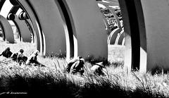 Under The Sculptures (Anwarrovic) Tags: sculpture art human monochrome sunlight light shadow outdoor surabaya