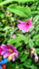 19/08/2016 day 362 : Foraging bee (shaye.photo@yahoo.fr) Tags: ifttt 500px nature flower summer flora garden no person outdoors petal floral color bee abeille butineuse forage figurine miss meteo project365 365days 365photos iphone iphone6s iphonephoto shotoniphone missmeteo corrze limousin sudouest cloudy