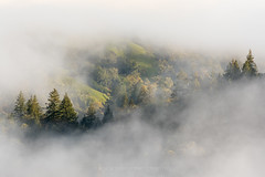 Apricity (Bob Bowman Photography) Tags: trees fog light redwoods hillside sonomacounty california local morning hills backroads oaks
