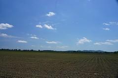 Culturi agricole