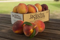 Cresthaven-8145 (Jackson's Orchard) Tags: kentucky peach orchard bowlinggreen bowlinggreenky cresthaven jacksonsorchard
